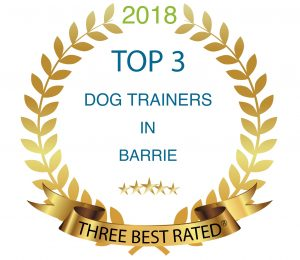 Top 3 dog trainer in barrie