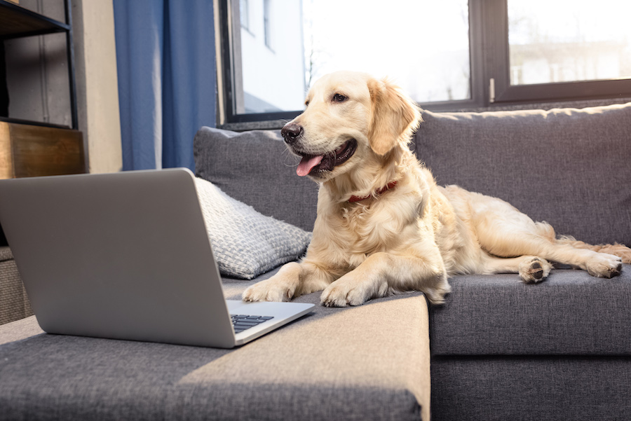 Video Training for Dogs